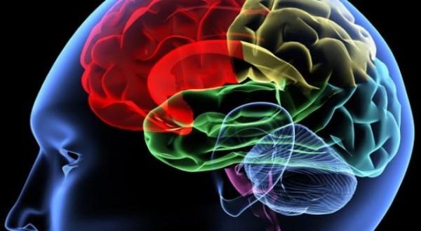 640_brain-e1335802074408