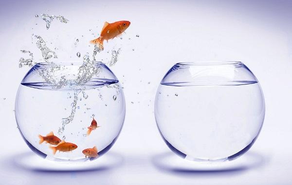 April-Fools-Day-April-1-Aquarium-Fish-Water-1920x2560